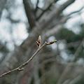 Photos: Buds04092012dp2-03