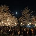 写真: 道後公園のお花見