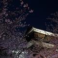 写真: 松山城ライトアップ