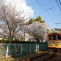 写真: お城と桜と路面電車