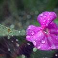 霖雨(りんう).......