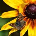 写真: 蝶々さん、いらっしゃ~い!