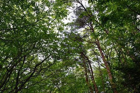 木々@森林公園[4/29]