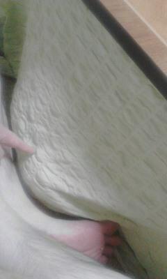 写真: やまぶきたんが炬燵内で、凄くタグレ中w。俺の席なんだけどなあ。天板まで遠いよお。