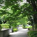 大乗寺坂~緑の小みちへ ☆