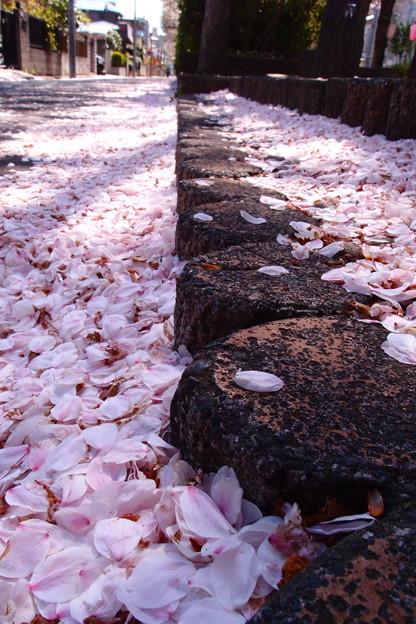 写真: 桃色絨毯