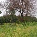 写真: P1060607 (800x534)