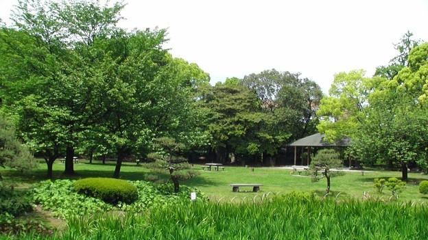 清澄庭園6