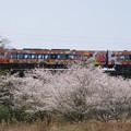 Photos: 桜とアンパンマン列車