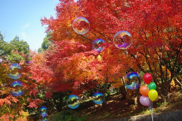 Photos: 真っ赤な秋にふわり