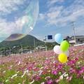 Photos: IMGP2922_1025