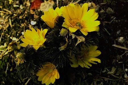 春の気配IMGP2390-3