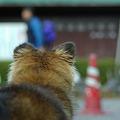 Photos: 気ぃつけぇ