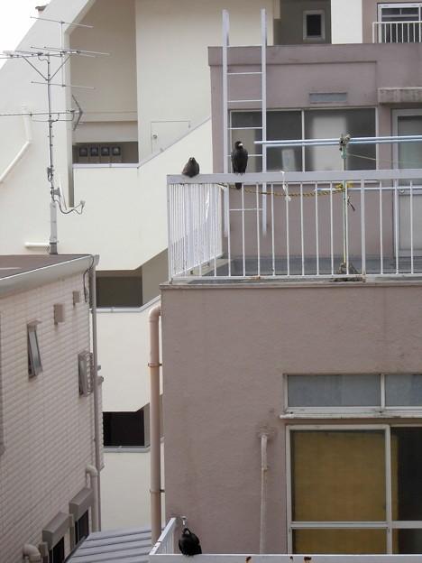 カラス(恋の行くへ)_2015.07.02.-10