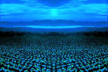 キャベツ畑-04