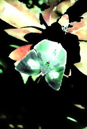 冬の蝶-03