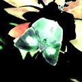 写真: 冬の蝶-03