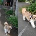 写真: お散歩2