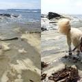 写真: 鯛ノ浦海とトラッチ