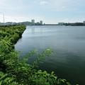 Photos: DSC_0520 東郷調整池(愛知池)その6