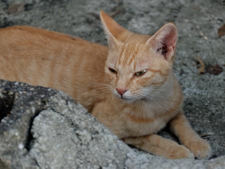 DSC_1211 第一島猫発見!