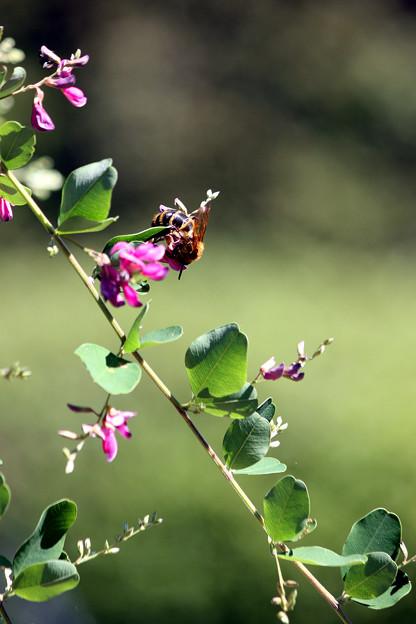 萩と熊ん蜂