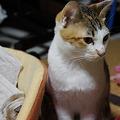 Photos: おなかおねえちゃん