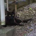 Photos: 黒い仔猫