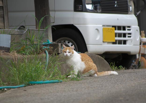 タマに会う猫さん