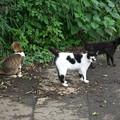 三匹の猫さんが・・・