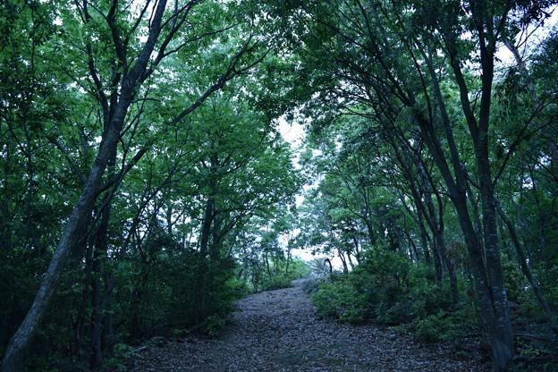 写真: 森の奥