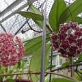 Photos: 桜ラン2種