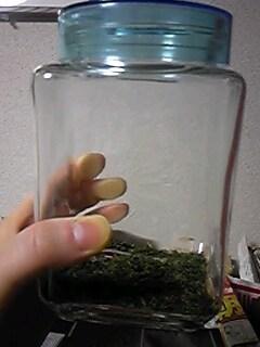 乾燥出がらし茶