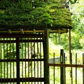 Photos: 緑生す門