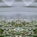 写真: W噴水