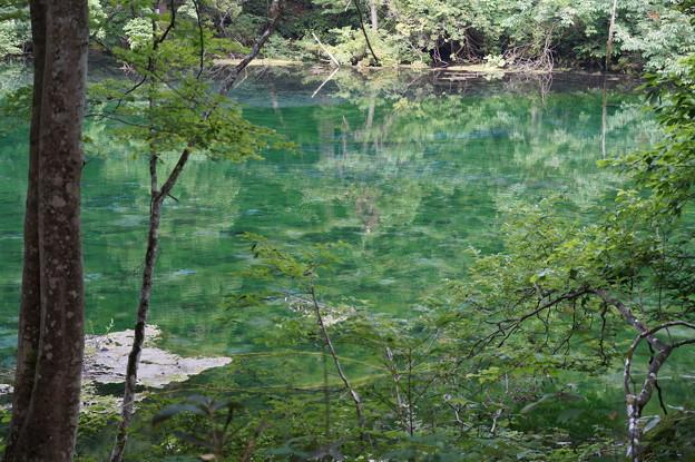 龍ヶ窪の池 2