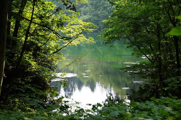 神秘の池 龍ヶ窪