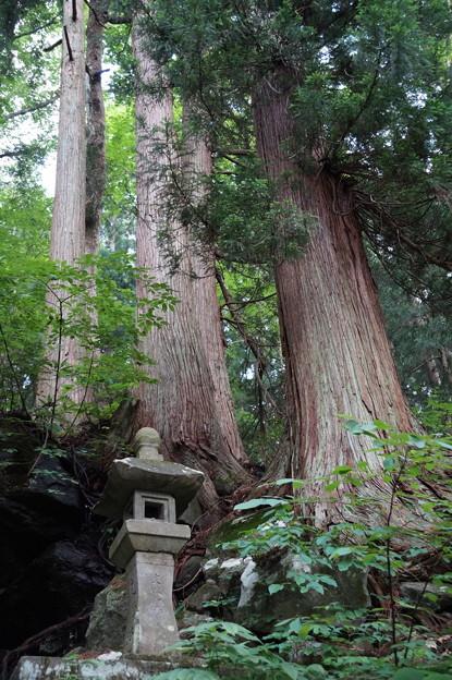 3本の巨木