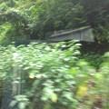 写真: 緑木きらきら