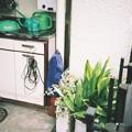 Photos: 緑の・・・