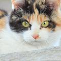 Photos: yamanao999_cats_084