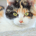 yamanao999_cats_084
