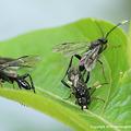 写真: ハバチの一種