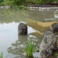 Photos: 池の風景