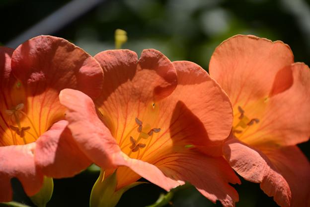 守り神の花
