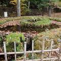さかな公園の湧水