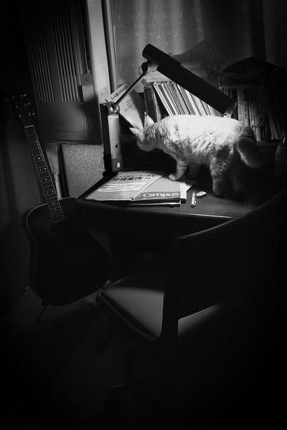 蛍雪の時:with cat