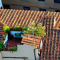 Photos: 屋上のオアシス