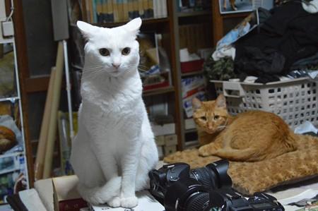 2015年07月23日のシロちゃん(2歳)