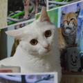 2015年08月01日のシロちゃん(メス2歳)